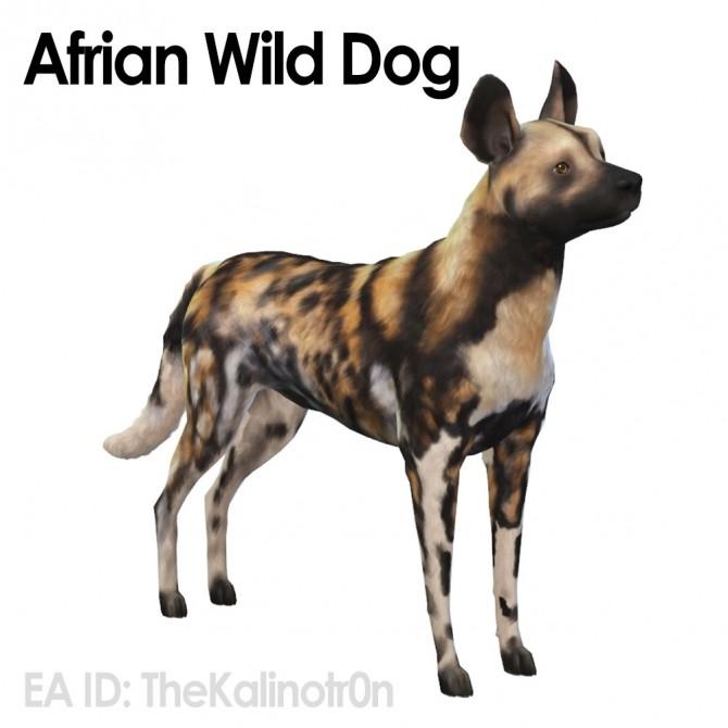 Ferret, Aardwolf, African Wild Dog and Hyena at Kalino image 6620 670x670 Sims 4 Updates