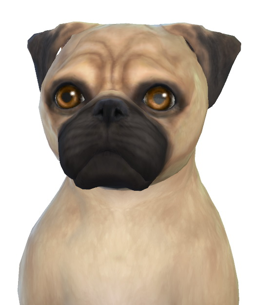 Rosie the Pug dog at Enchanting Essence image 7016 Sims 4 Updates