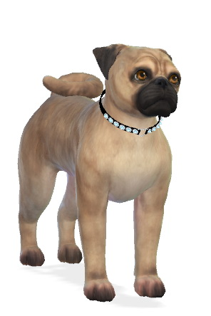 Sims 4 Rosie the Pug dog at Enchanting Essence