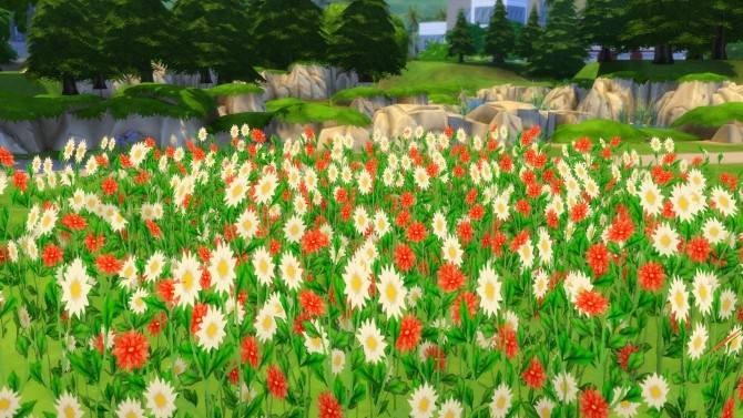 Early Spring Fields of Wildflowers by Snowhaze at Mod The Sims image 96 670x377 Sims 4 Updates