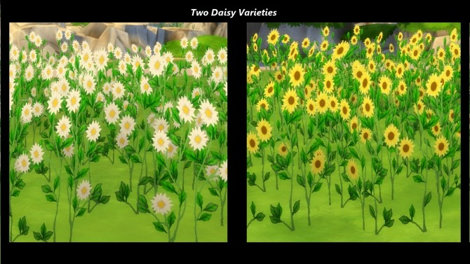 Early Spring Fields of Wildflowers by Snowhaze at Mod The Sims image 97 670x377 Sims 4 Updates