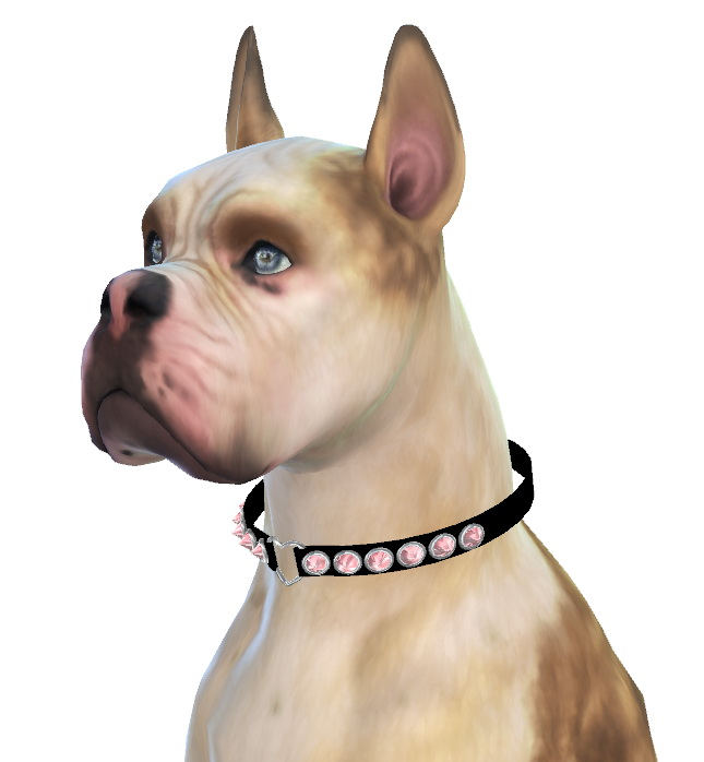 Sims 4 Mika the Boxer Dog at Enchanting Essence