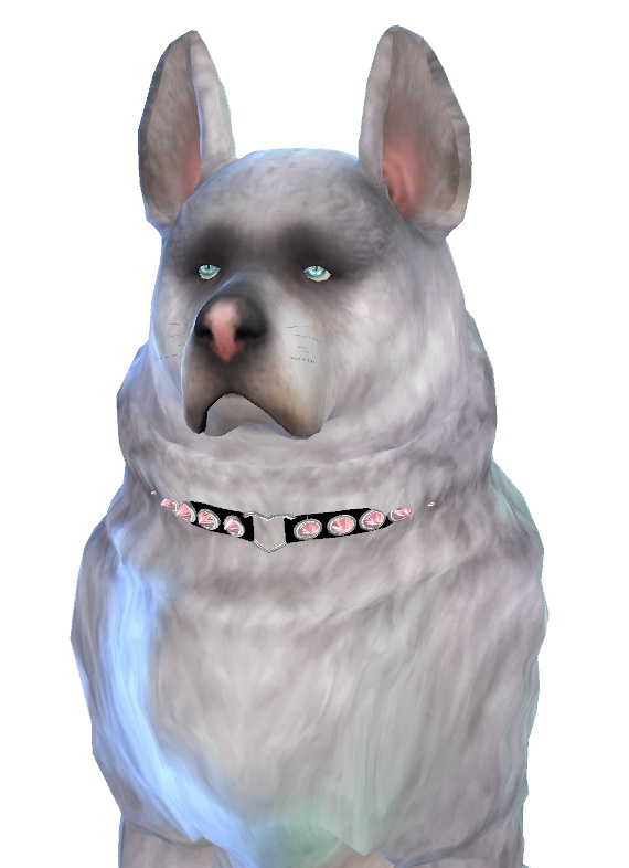 Fai dog at Enchanting Essence image 1345 Sims 4 Updates