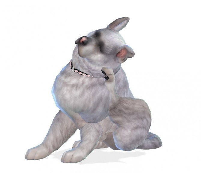 Fai dog at Enchanting Essence image 1365 670x575 Sims 4 Updates