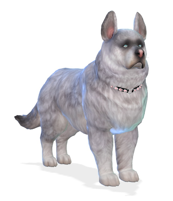 Fai dog at Enchanting Essence image 1405 Sims 4 Updates