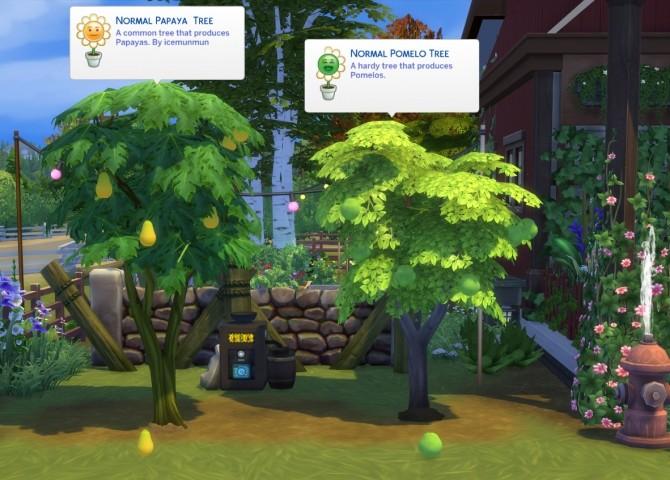 Harvestable Papaya & Pomelo by icemunmun at Mod The Sims image 406 670x480 Sims 4 Updates