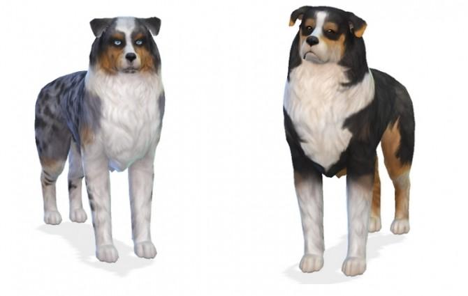 Maggie and Finn Australian Shepherds at Enchanting Essence image 558 670x425 Sims 4 Updates