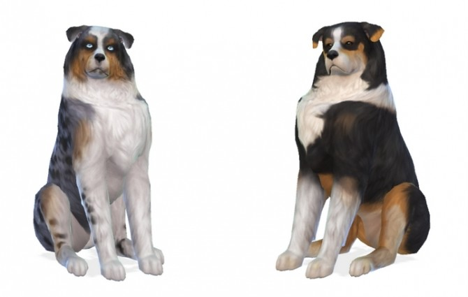 Sims 4 Maggie and Finn Australian Shepherds at Enchanting Essence