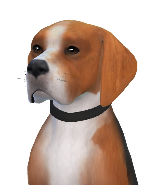 Jack the Beagle at Enchanting Essence image 819 Sims 4 Updates