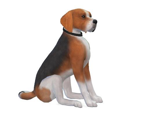 Jack the Beagle at Enchanting Essence image 835 Sims 4 Updates