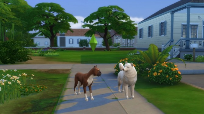 The Crittur Family   dogs by n8smom8496 at Mod The Sims image 7316 670x377 Sims 4 Updates