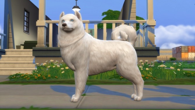 Sims 4 The Crittur Family   dogs by n8smom8496 at Mod The Sims