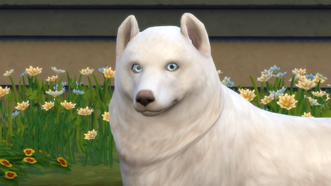 The Crittur Family   dogs by n8smom8496 at Mod The Sims image 7617 670x377 Sims 4 Updates