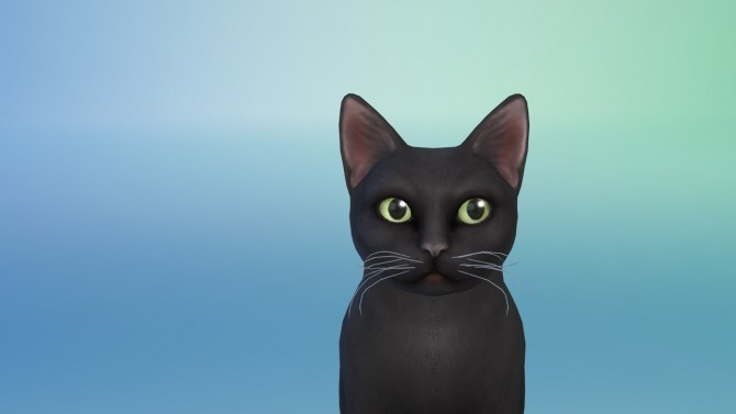 Sims 4 Cat whiskers at PW's Creations