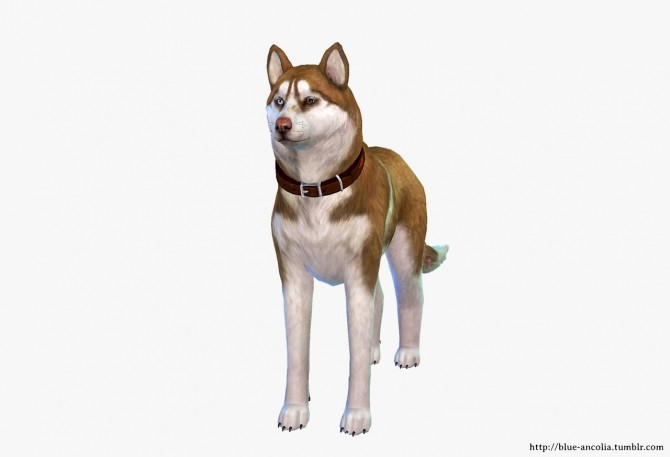 Sims 4 Siberian Husky Makeover (second version) at Blue Ancolia