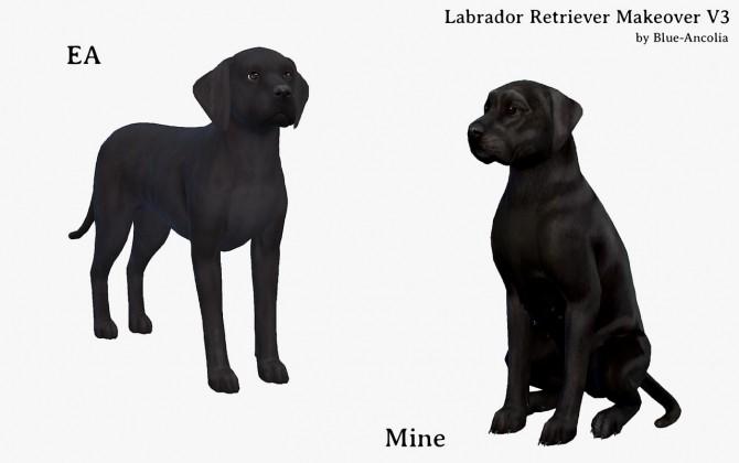Labrador Retriever Makeover V3 at Blue Ancolia image 1167 670x420 Sims 4 Updates
