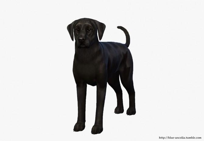 Labrador Retriever Makeover V3 at Blue Ancolia image 1177 670x463 Sims 4 Updates