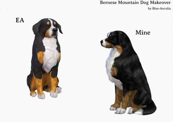Sims 4 Bernese Mountain Dog Makeover at Blue Ancolia