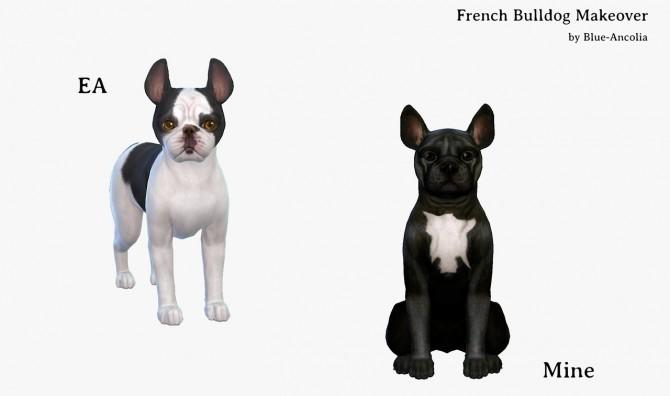 Sims 4 French Bulldog Makeover at Blue Ancolia