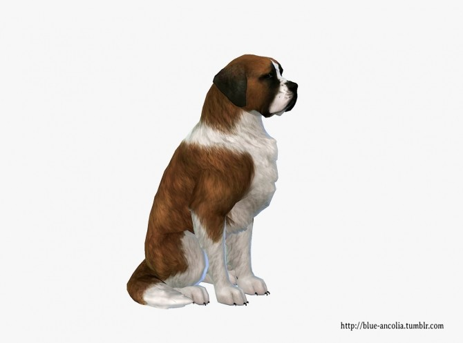 Sims 4 Saint Bernard dog makeover at Blue Ancolia