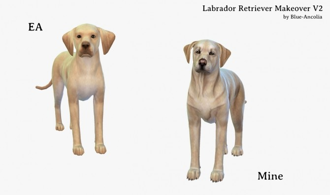 Sims 4 Labrador Retrievers Makeover at Blue Ancolia