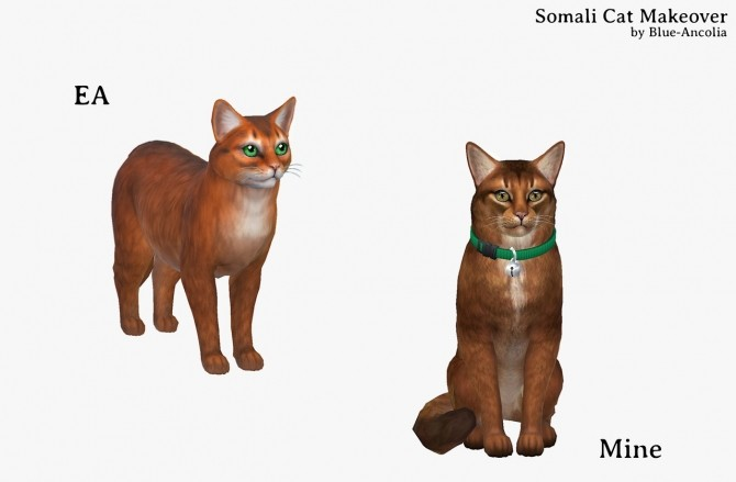 Somali Cat Makeover at Blue Ancolia image 877 670x439 Sims 4 Updates