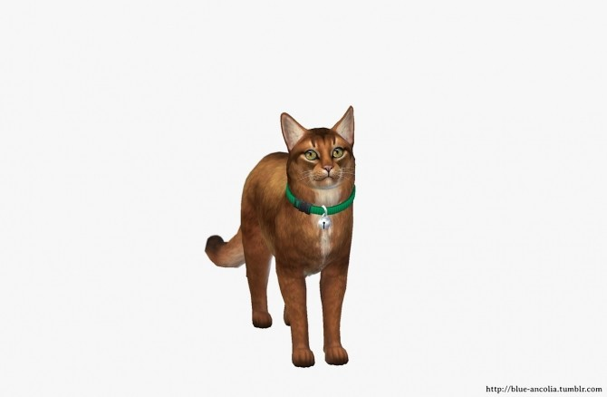 Somali Cat Makeover at Blue Ancolia image 887 670x438 Sims 4 Updates