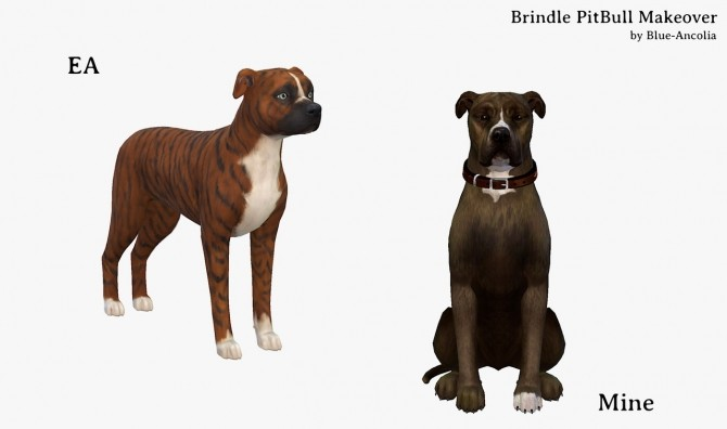 Brindle PitBull Makeover (third version) at Blue Ancolia image 897 670x396 Sims 4 Updates