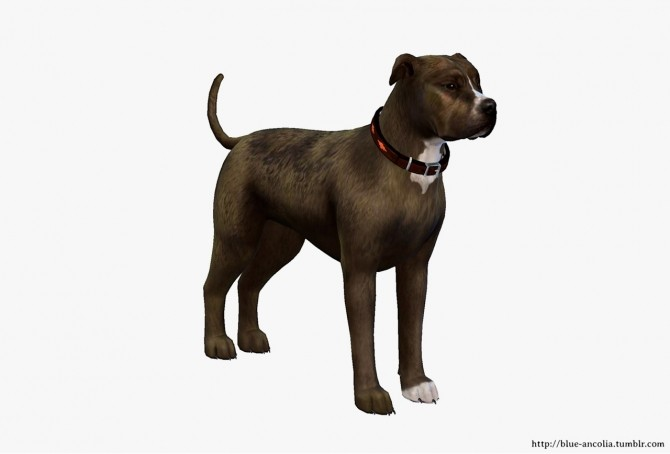 Sims 4 Brindle PitBull Makeover (third version) at Blue Ancolia