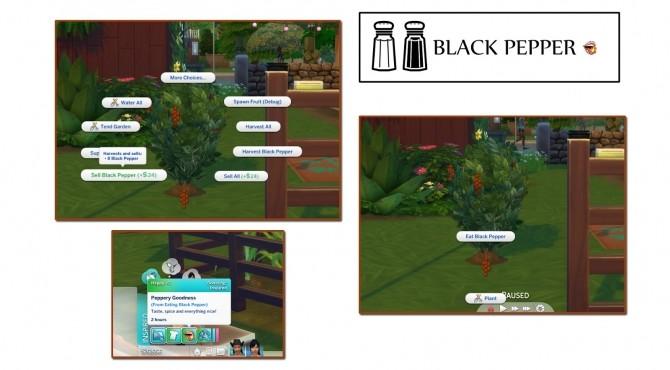 Sims 4 HARVESTABLE BLACK PEPPER at Icemunmun