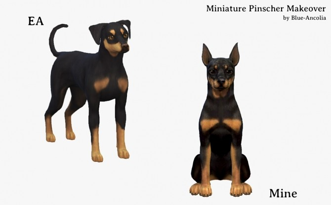 Miniature Pinscher Makeover at Blue Ancolia image 1723 670x414 Sims 4 Updates