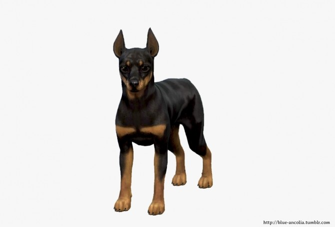 Miniature Pinscher Makeover at Blue Ancolia image 1733 670x455 Sims 4 Updates