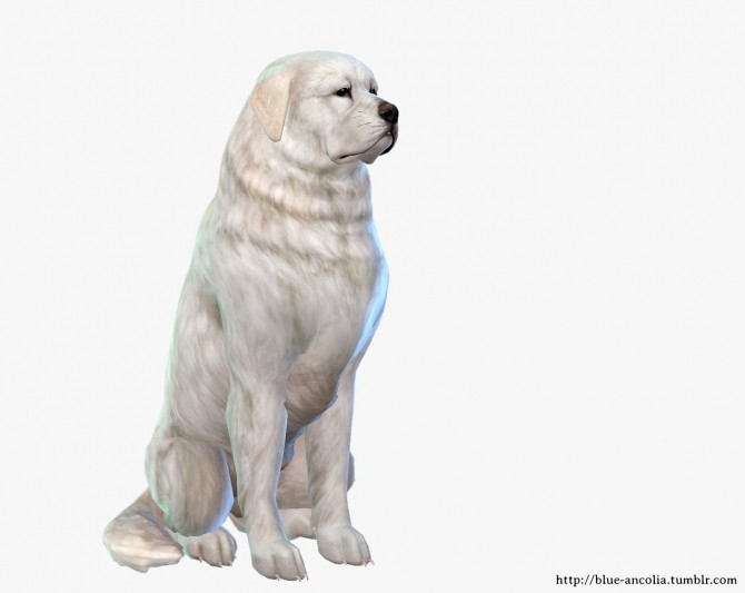 Great Pyrenees Makeover at Blue Ancolia image 1753 670x533 Sims 4 Updates