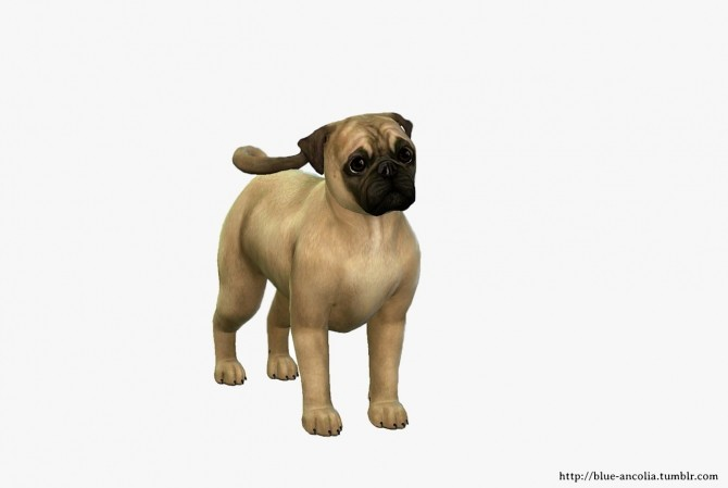 Pug Makeover at Blue Ancolia image 607 670x449 Sims 4 Updates