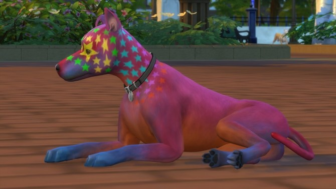 Rocco Superstar Mixed Breed Dog Basenji by PetWorld456 at Mod The Sims image 5515 670x377 Sims 4 Updates