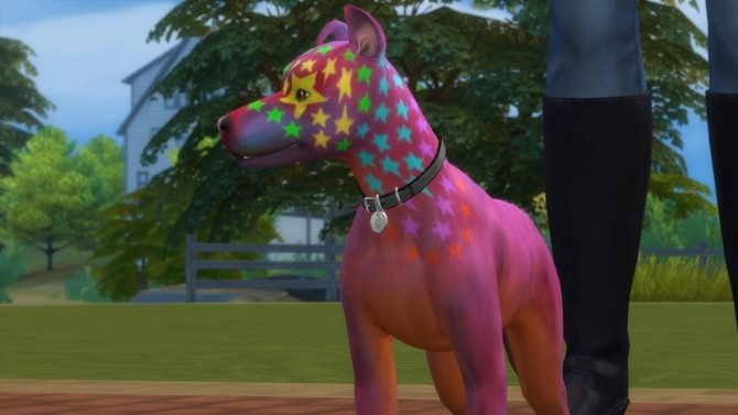 Rocco Superstar Mixed Breed Dog Basenji by PetWorld456 at Mod The Sims image 5614 670x377 Sims 4 Updates