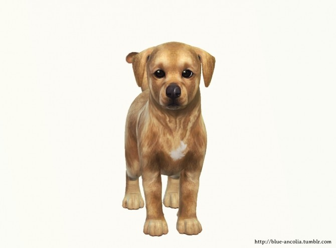 Sims 4 Holy, adorable Golden Retriever puppy at Blue Ancolia