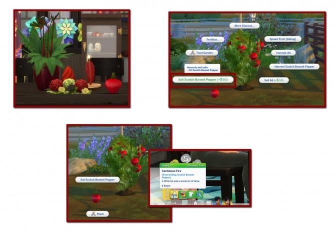 Sims 4 HARVESTABLE SCOTCH BONNET PEPPER at Icemunmun