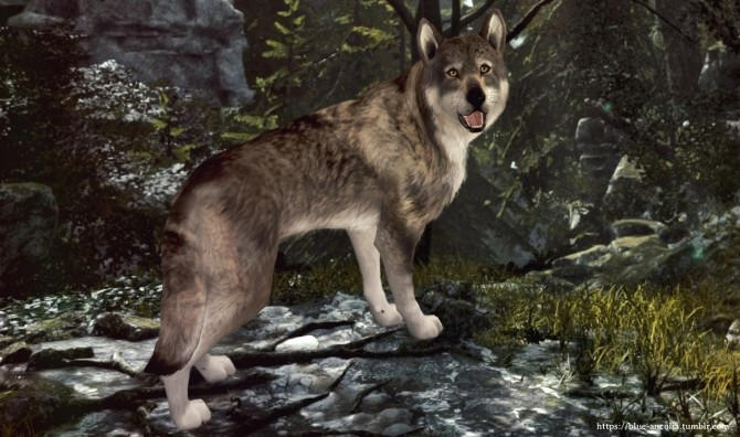 Sims 4 Nymeria high content wolfdog at Blue Ancolia