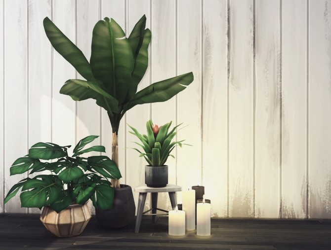 5K Follower Gift plants at Harrie image 17311 670x507 Sims 4 Updates