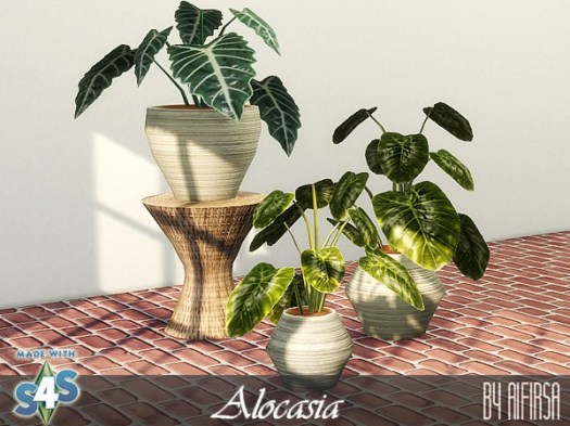 Alocasia at Aifirsa image 598 Sims 4 Updates