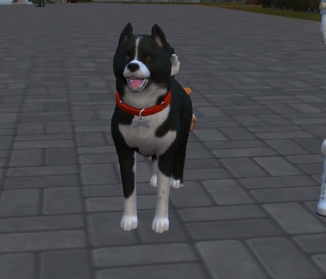 Karelian Bear Dog by ScientificallyCorrect82 at Mod The Sims image 10512 670x573 Sims 4 Updates