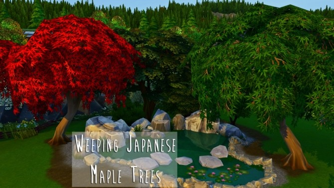 Weeping Japanese Maple Trees at Teanmoon image 3801 670x377 Sims 4 Updates