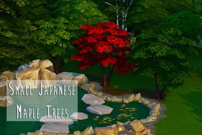 Weeping Japanese Maple Trees at Teanmoon image 3818 670x449 Sims 4 Updates