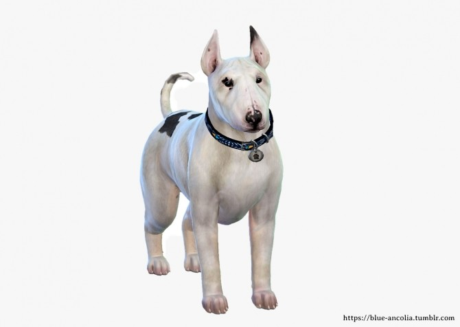 Sims 4 BullTerrier Makeover at Blue Ancolia