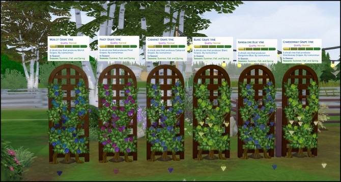 HARVESTABLE GRAPES 6 VARIETIES at Icemunmun image 2891 670x358 Sims 4 Updates