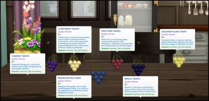 HARVESTABLE GRAPES 6 VARIETIES at Icemunmun image 2901 670x326 Sims 4 Updates