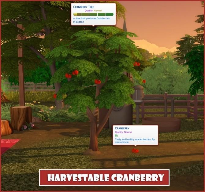 HARVESTABLE CRANBERRY at Icemunmun image 13414 670x629 Sims 4 Updates