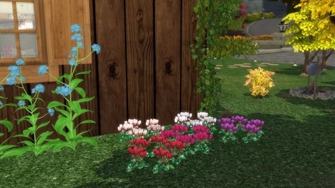 Sims 4 Cyclamen flowers by Alikis Nook at Sims 4 Studio