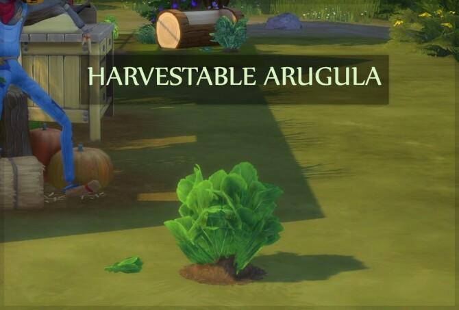 HARVESTABLE ARUGULA at Icemunmun image 3891 670x453 Sims 4 Updates